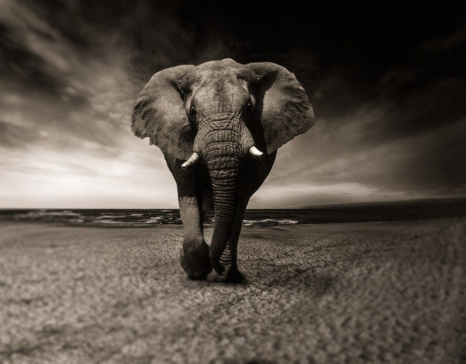 elephant 2870777 1280