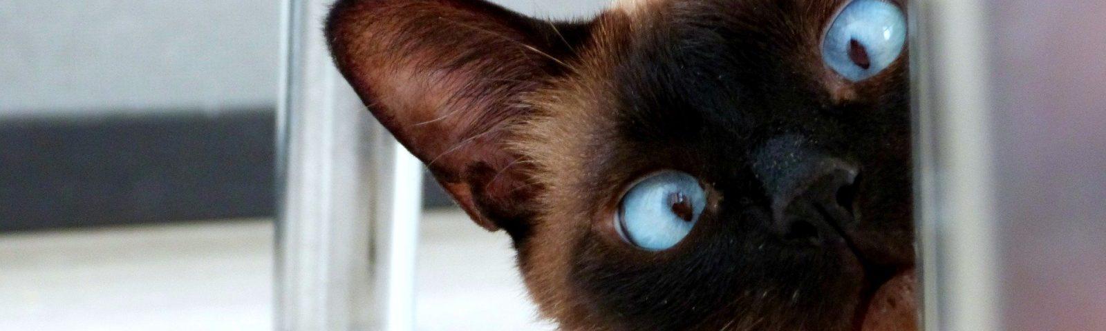 eyes 3924800 1920