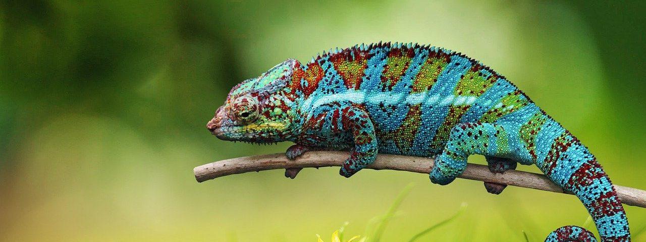 chameleon 6159370 1280