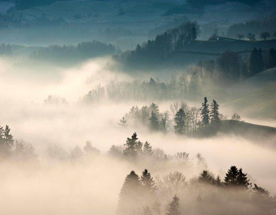Trees Covered with Fog jcWnz0dXOgKD 1600
